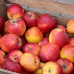 Darmowe jabłka po raz n-ty :)